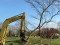 tree shear 2