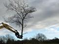 tree shear 5